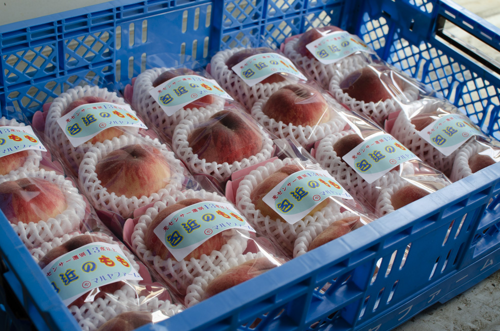 The farmer who produces the sweetest peaches in the world, Mr. Matsumoto.